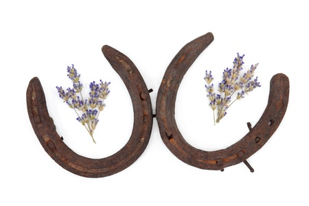 Lavender herb flower leaf sprigs with two rusty old horseshoes isolated over white background. photo