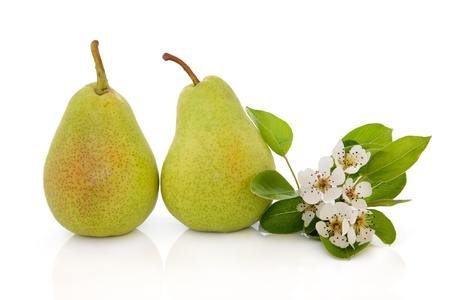 Pears and flower blossom leaf sprig isolated over white background. Rosemarie sempre variety.