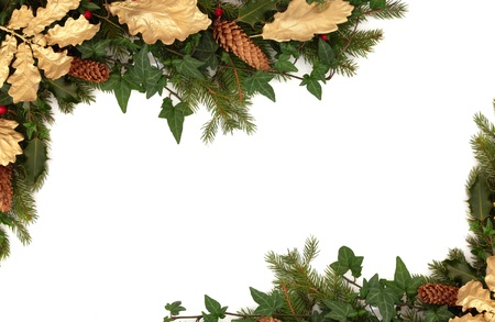 ivy: Christmas border of holly, ivy, pine cones, golden oak leaves and blue spruce fir leaf sprig isolated over white background.