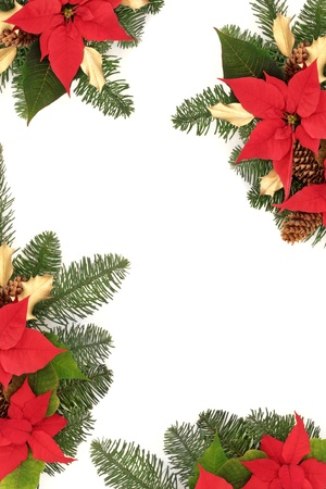 Christmas border of poinsettChristmas border of poinsettia flower heads, golden holly, pine cones and blue spruce fir leaf sprig isolated over white background. photo