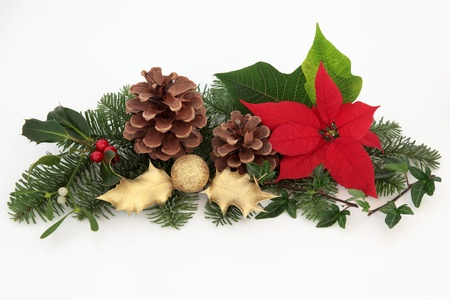 pine fruit: Christmas decoration of red poinsettia flower, mistletoe, ivy, gold holly and glitter bauble with spruce fir leaf sprigs and pine cones isolated over white background.