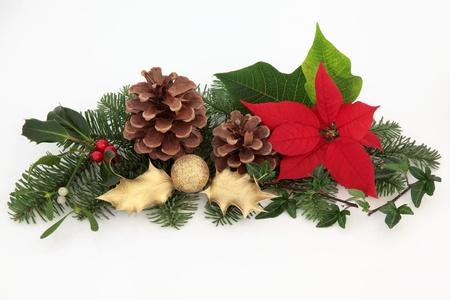flor de pascua: Decoraci�n de Navidad de flor de pascua roja flor, el mu�rdago, la hiedra, el acebo y la chucher�a de oro brillan con ramitas de abeto hoja de pino y pi�as de los pinos aislados sobre fondo blanco.