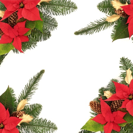 poinsettia: Christmas decorative border of poinsettia flower heads, golden holly, pine cones and spruce fir leaf sprig isolated over white background.