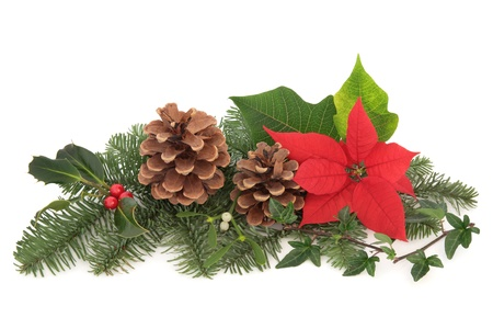poinsettia: Christmas decoration of mistletoe, holly with berries, poinsettia flower, ivy, pine cones and spruce fir leaf sprig isolated over white background.