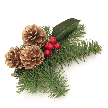 pine cones: Christmas decoration of holly berry and blue spruce fir leaf sprigs with golden pine cones isolated over white background.