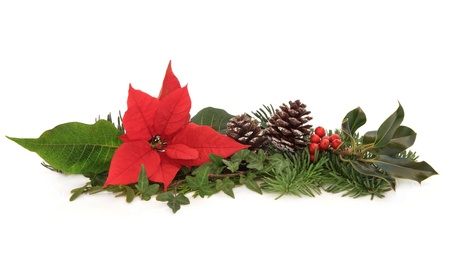 Christmas decoration of poinsettia flower, holly, ivy, pine cones and spruce fir leaf sprig isolated over white background. photo