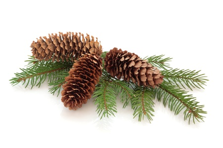 pine cones: Christmas decoration of pine cone group with conifer fir leaf sprig isolated over white background. Stock Photo