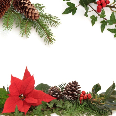 Christmas decorative border of poinsettia flower, holly, ivy, pine cones and spruce fir leaf sprig isolated over white background.