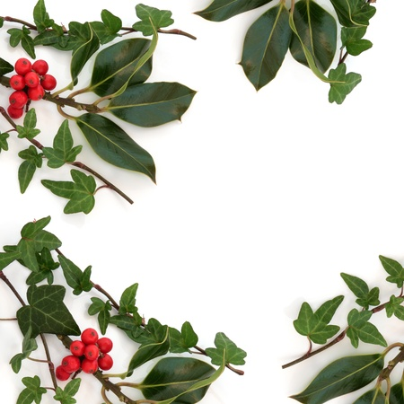 Ivy leaf and holly leaf sprigs with red berries creating an abstract border isolated over white background. photo