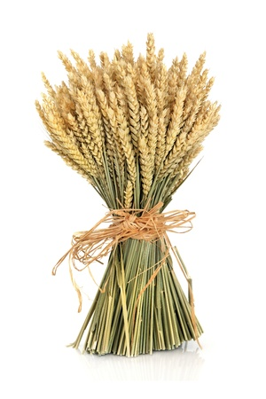 Wheat bundle tied with raffia isolated over white background. photo