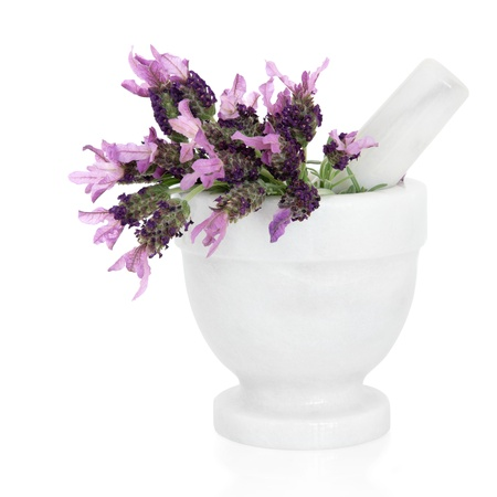 Lavender herb  flower and leaf sprigs in a marble mortar with pestle isolated over white background. Lavandula. photo