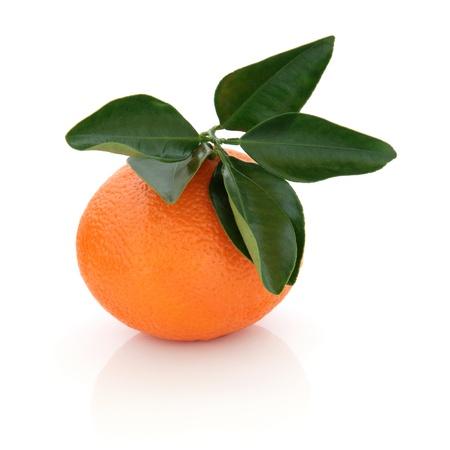 florida citrus: Mandarin orange with leaf sprig isolated over white background. Stock Photo