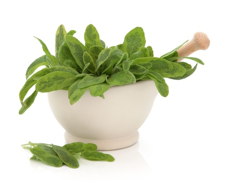 salvia: Variegated sage herb leaf sprigs in a cream stone mortar with pestle and scattered leaves isolated over white background. Saliva.