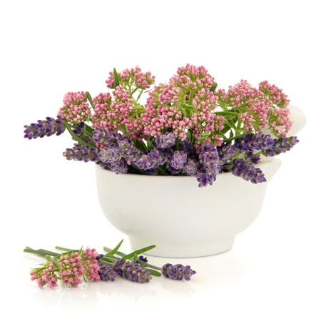 valerian: Valerian and lavender herb flowers in a porcelain  mortar with pestle isolated over white background.