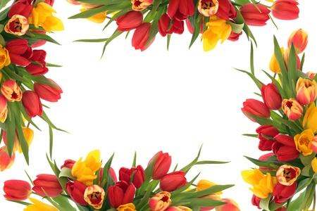 cenefas flores: Tulipán frontera primavera aisladas sobre fondo blanco.