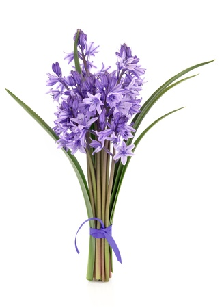 Bluebell flowers tied in a bunch isolated over white background. Stock Photo - 12046232