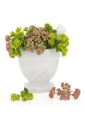 alchemilla: Valeriano e donna mantello rametti di fiori erba in un mortaio di marmo con pestello con fiori sparsi isolato su sfondo bianco. Valeriana e Alchemilla.