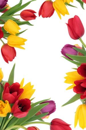 白い背景の上に分離されたチューリップ花の春罫線 写真素材