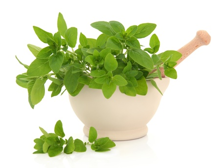 Oregano herb leaf sprigs in a cream stone mortar with pestle with scattered leaves isolated over white background. Stock Photo - 12420260