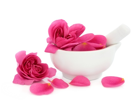 rose petals: Rose flower petals in a porcelain mortar with pestle and scattered isolated over white background. Rosa rugosa. Stock Photo