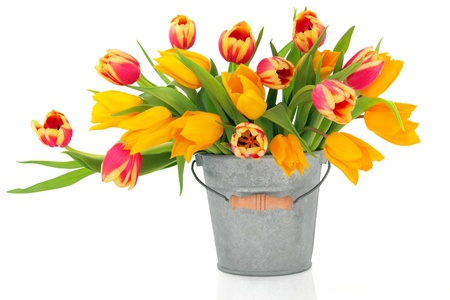 tulips in vase: Tulip flowers in red, yellow and striped colours in an old metal bucket  and scattered isolated over white background.