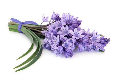 Bluebell flowers tied in a bunch over white background. Stock Photo - 12420285