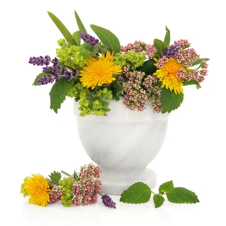 natural selection: Lavender, valerian, ladies mantle and dandelion flower heads with aloe vera and lemon balm leaves in a marble mortar isolated over white background.  Stock Photo