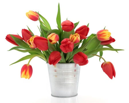 Red and yellow and striped tulip flowers in an aluminum vase isolated over white background.