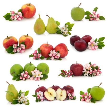 ciruela: Gran colecci�n de manzana, pera y ciruela, con flor de la flor correspondiente y ramitas de hojas aisladas sobre fondo blanco.