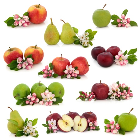 Large collection of apple, pear and plum fruit with corresponding flower blossom and leaf sprigs isolated over white background. photo