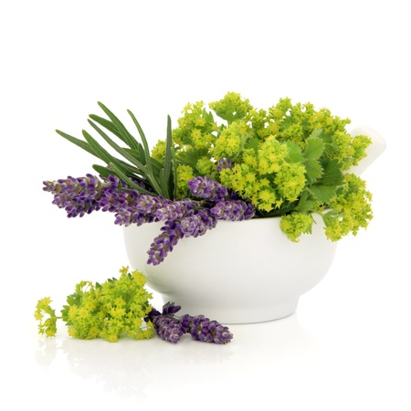 lady's: Lavender and ladies mantle herb flower heads in a porcelain mortar with pestle isolated over white background.
