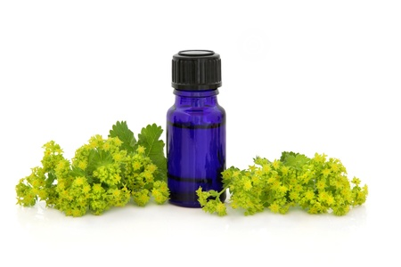 alchemilla: Ladies mantle herb flower sprigs  with an aromatherapy  bottle over white background. Alchemilla.