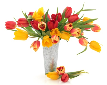 Tulip flowers in red, yellow and striped in an old metal vase  and scattered isolated over white background. Stock Photo - 12420303