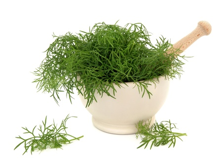 foeniculum vulgare: Fennel herb leaf sprigs in a stone mortar with pestle and scattered isolated over white background. Foeniculum vulgare. Stock Photo