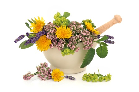 Lavender herb, valerian, ladies mantle and dandelion flowers with aloe vera, sage and lemon balm leaf sprigs in a cream stone mortar with pestle isolated over white background. Stock Photo