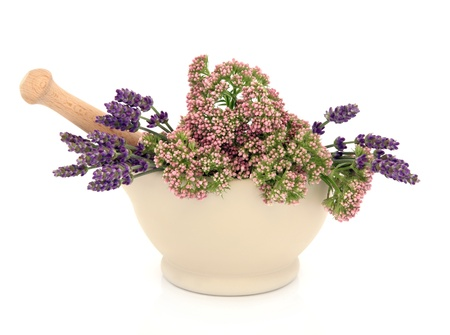 valerian: Lavender and valerian herb flower heads in a cream stone mortar with pestle isolated over white background. Stock Photo