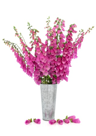 floral arrangements: Foxglove flower arrangement in a distressed aluminum vase with scattered petals isolated over white background.