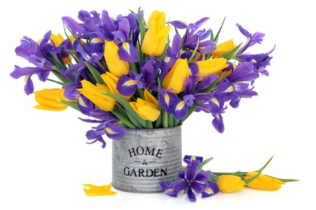 Blue flag iris and yellow tulip flowers scattered and in an old tin can with home and garden title over white background.  photo