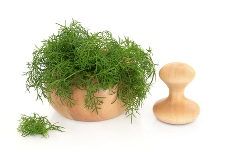 foeniculum vulgare: Fennel herb leaf sprigs in a beech wood mortar with pestle and with scattered leaves isolated over white background  Foeniculum vulgare  Stock Photo