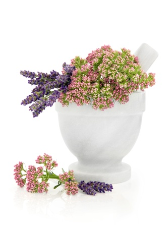 sedative: Valerian and lavender herb flowers in a marble mortar with pestle isolated over white background  Stock Photo