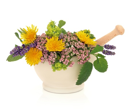 Lavender herb, valerian, ladies mantle and dandelion flower heads with aloe vera, sage and lemon balm leaf sprigs in a  mortar with pestle isolated over white background  photo