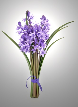 Bluebell flowers tied in a bunch over silver grey background  Stock Photo - 12760182