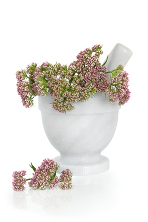 homeopatia: Ramitas de hierba valeriana flores en un mortero de m�rmol con mortero con flores dispersas aisladas sobre fondo blanco Valeriana Foto de archivo