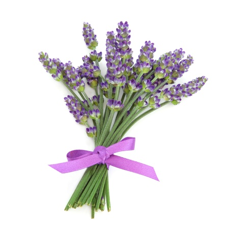 Lavender herb flowers tied with a satin purple bow isolated over white background  Lavandula  photo