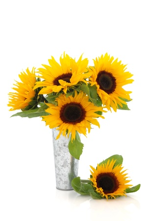 Sunflowers in a distressed aluminum vase and loose over white background  photo