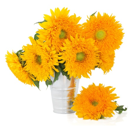 Sunflowers  in an aluminum vase on a white background   photo