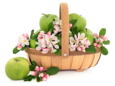 Granny smith green apple fruit with flower blossom in a rustic wooden basket over white background  photo