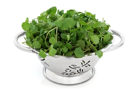 Watercress in a stainless steel colander over white background Stock Photo - 13693390