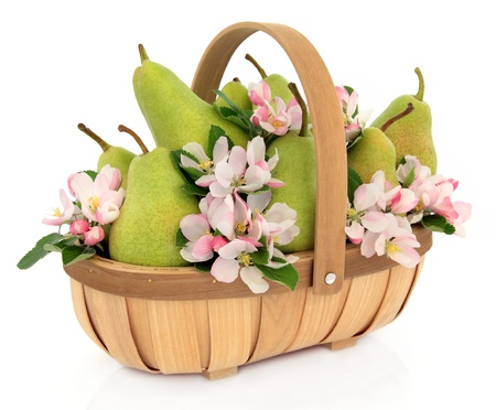 Pear fruit with flower blossom and leaf sprigs in a rustic wooden basket over white background  Rosemarie sempre variety  photo