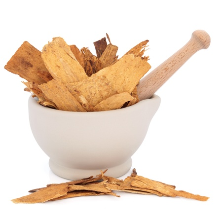 Astragalus root herb used in traditional chinese herbal medicine in a stone mortar with pestle over white background  Used to speed healing and treat diabetes  Zhi huang qui  Astragali radix  photo